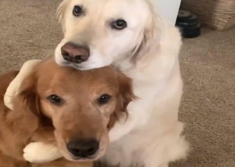 Dog apologizes to his brother after eating his food