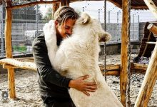 Dean Schneider drops his prestigious job for animals in Africa
