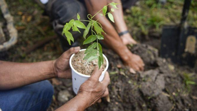 Ethiopia wants to plant 200 million trees in one day