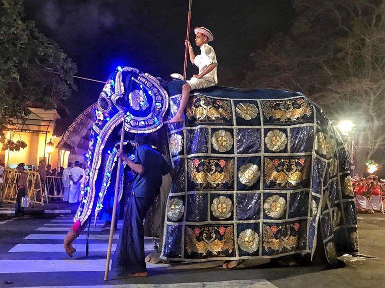 After storm of protest: emaciated elephant no longer has to walk in parade in Sri Lanka
