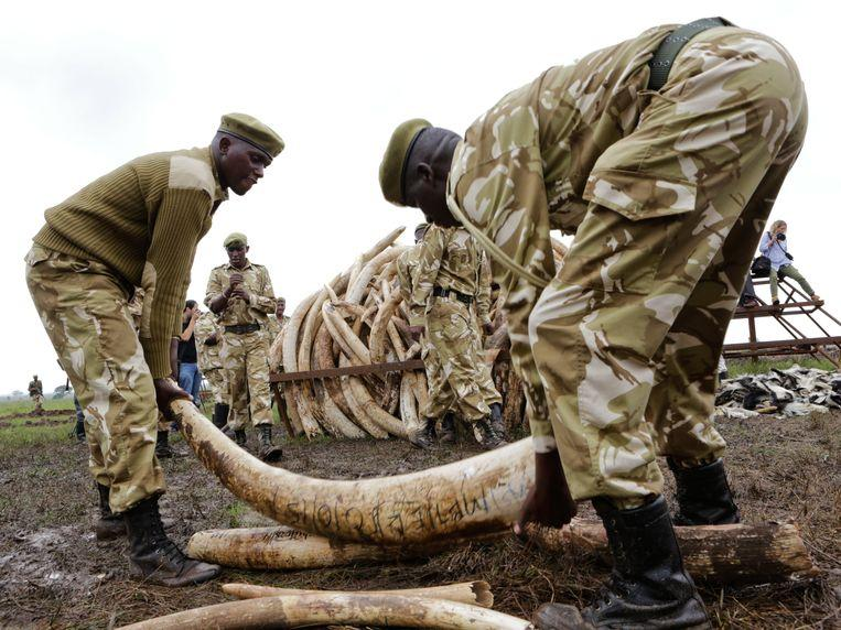 Tanzania arrests man in possession of 338 pieces of elephant tusks