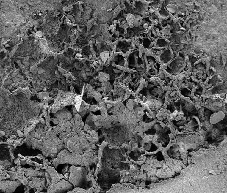 Oldest mushroom discovered in Congo: 810 million years old