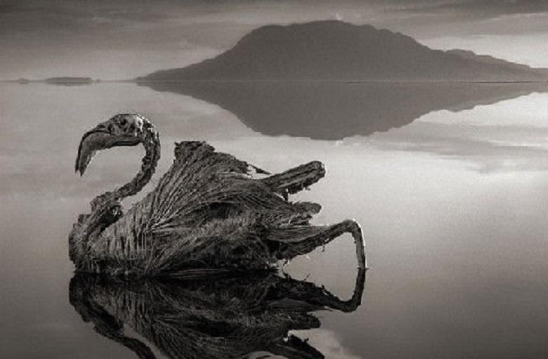 Lake Natron in Tanzania, turned animal to stone