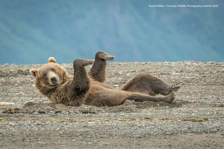 Nasty funny: funniest animal pictures of the year