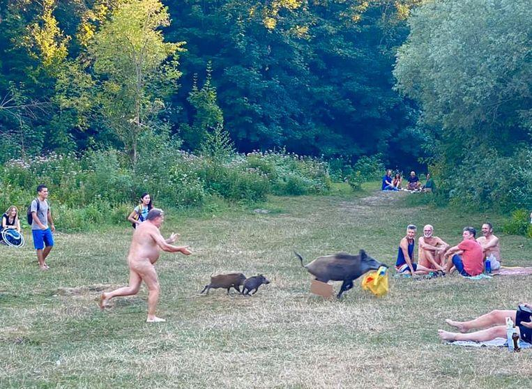 Naked swimmer chases wild boar that runs off with his laptop