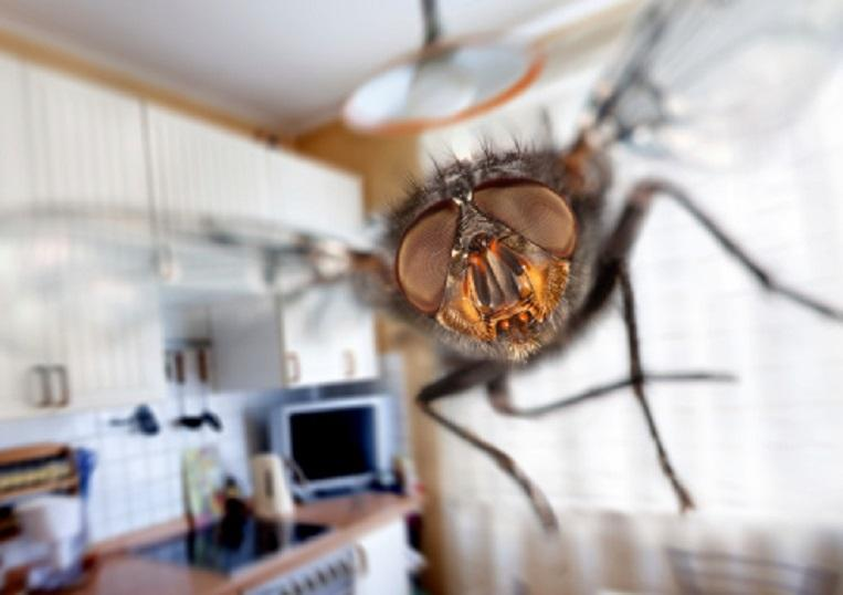 Man blows up his kitchen trying to kill a fly
