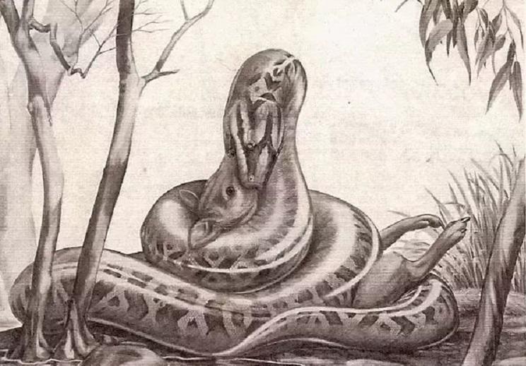 Has a snake ever swallowed an elephant?