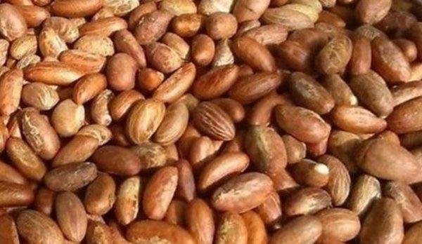 10 benefits of Bitter Kola that will make you forget its bitter taste