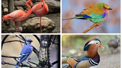 The most beautiful birds on Earth