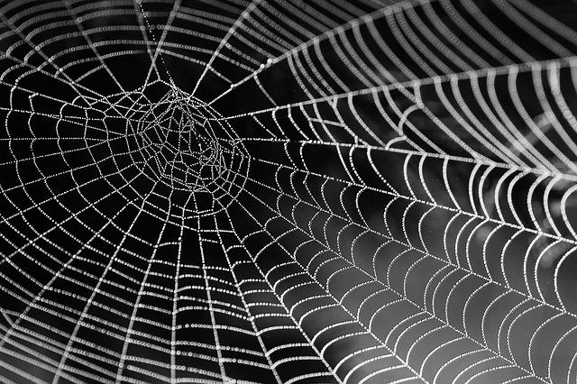 """Will disposable plastic bags soon be made from """"vegan spider silk""""?"""