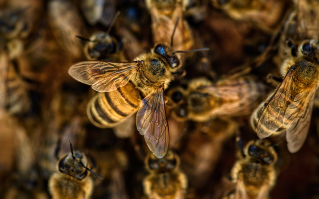 In Benin, bees invite themselves to a wedding and kill a guest