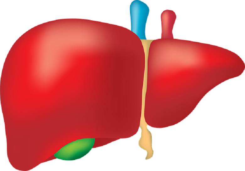 7 foods and drinks to protect and repair the liver