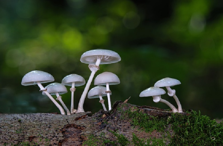 5 beneficial properties of mushrooms that you might not know about